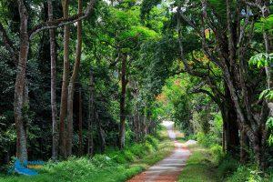 Cuc Phuong National Park – A Green Lung of Ninh Binh Province - Amazing Ninh Binh