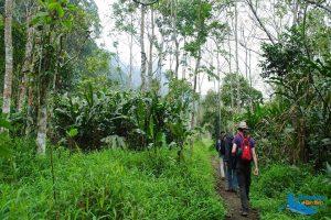 Cuc Phuong National Park - Amazing Ninh Binh