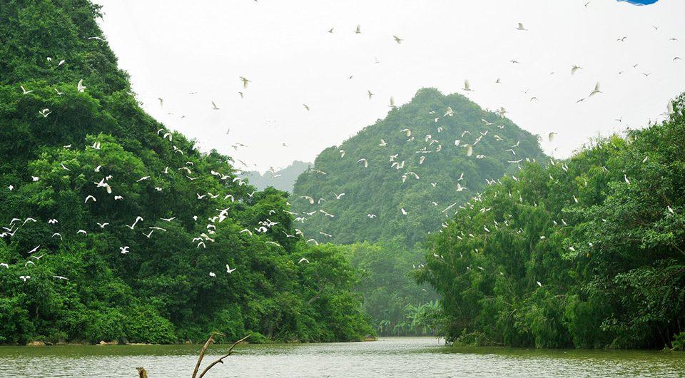 Thung Nham Bird Park - Amazing Ninh Binh