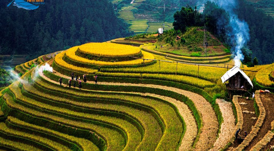 Vietnam Is Beautiful In The Season Of Ripe Rice